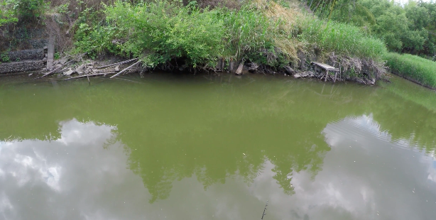 【埼玉 雷魚釣りのポイント】用水路で雷魚が釣れた!