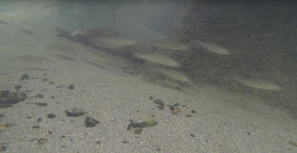 釣り動画の撮影はGoPro HERO5 がおすすめ!!『ウェアラブルカメラ レビュー』