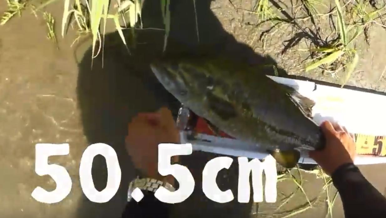 【釣り動画】奇跡!!スモールマウスバスの50アップが2連発!!荒川水系??
