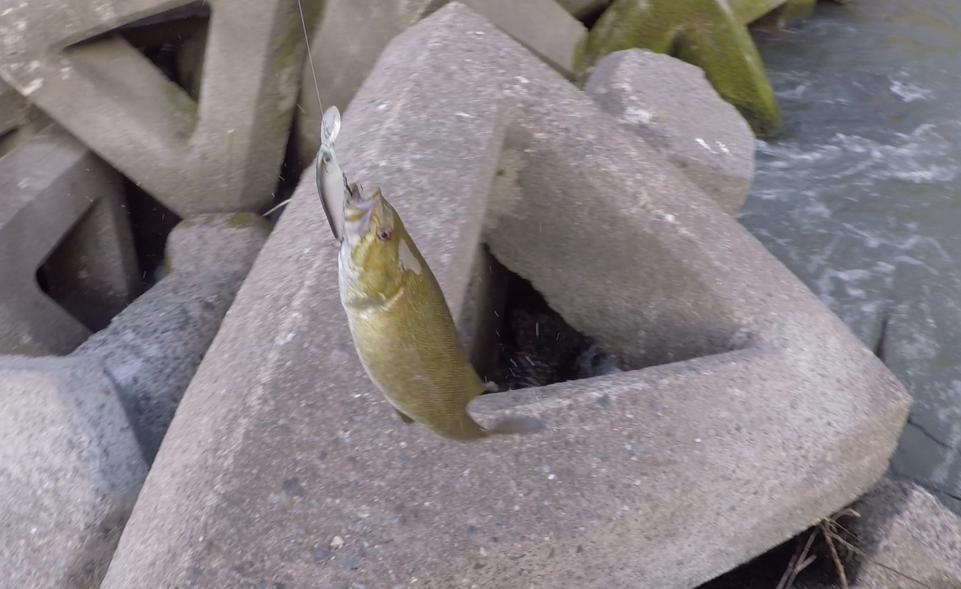 関東 おかっぱり バス釣りのポイント 8月の記録