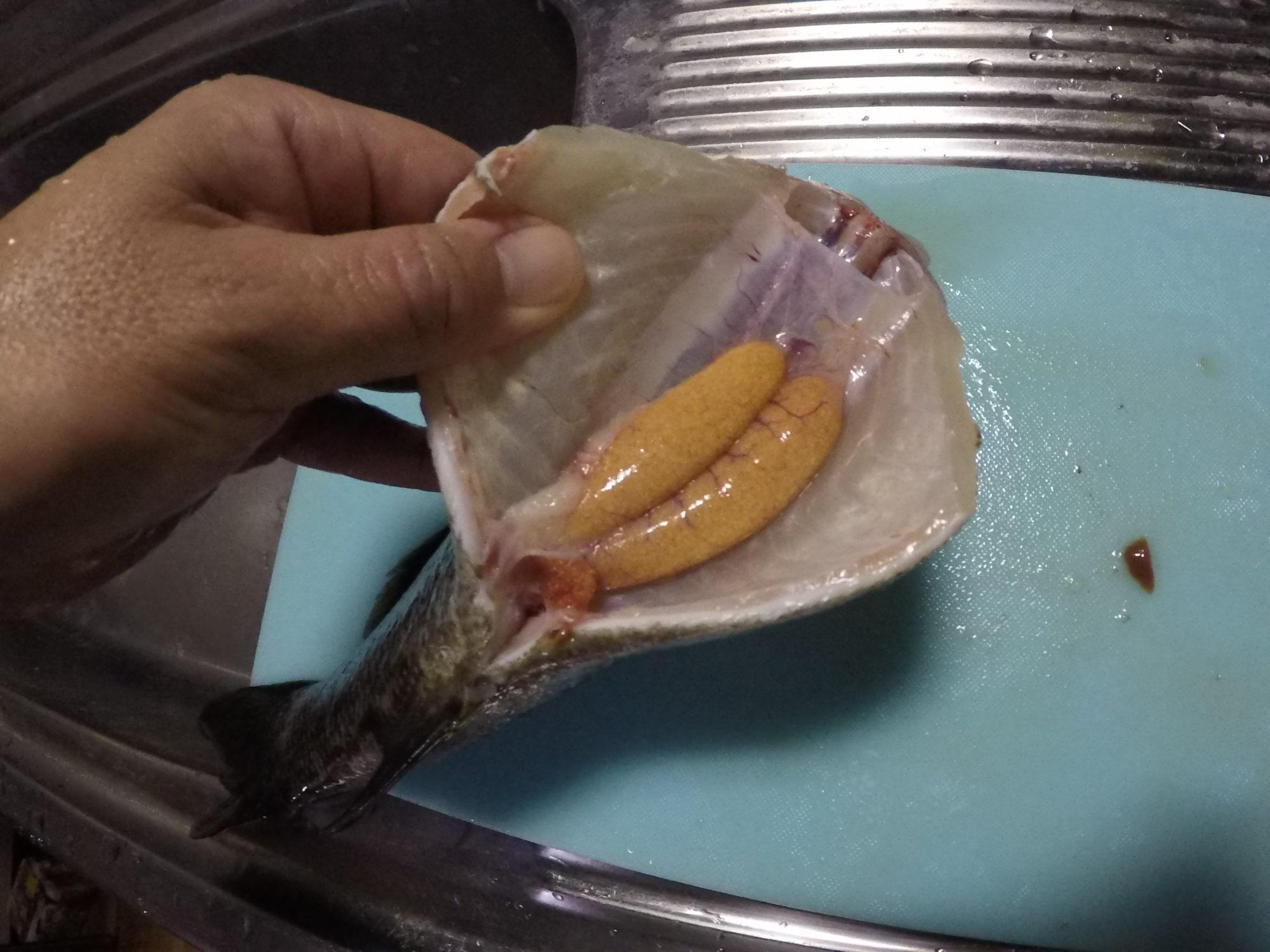 【ブラックバス 料理】釣ったバスをフライにして食べてみた!!