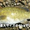 【入間川・荒川 バス釣りのポイントを探せ!】釣り動画をアップしているyasuさんのyoutubeチャンネルは参考になる!