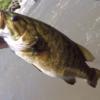 【バス釣りノーシンカー最強ワーム5選】一番釣れるワームは?